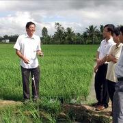 Trải lòng của 'cha đẻ' hạt gạo ngon nhất thế giới