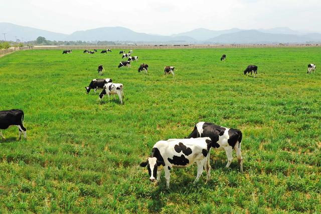 Công ty sữa bò lớn nhất Mỹ nộp đơn phá sản và bài toán tăng trưởng của Vinamilk