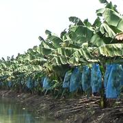 Vinamilk tiếp quản Nông trường Sông Hậu