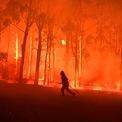 <p> Một nhân viên cứu hỏa được huy động để đối phó với đám cháy gần Colo Heights, phía tây nam thủ đô Sydney, Australia vào ngày 19/11. Hơn 150 đám cháy hoành hành ở cả bờ đông và bờ tây Australia, thiêu rụi hàng trăm căn nhà, gây thiệt hại ước tính hơn 30 triệu USD. Hơn 1.300 lính cứu hỏa được triển khai để đối phó với ngọn lửa trong thời tiết khô nóng và gió mạnh. Ảnh: <em>Reuters</em>.</p>