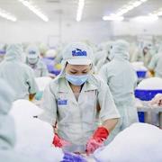 Hùng Vương muốn bán 5 triệu cổ phiếu quỹ, giá tối thiểu 4.000 đồng/cp