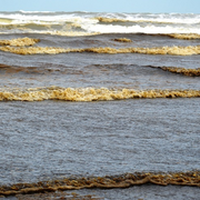 Nước biển đen bất thường