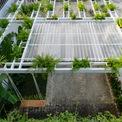 <p> Mái che gara ở sân trước cũng được tận dụng để trồng thêm cây xanh. Nhìn từ trên xuống, khoảng không gian này giống một thảm thực vật thu nhỏ.</p>