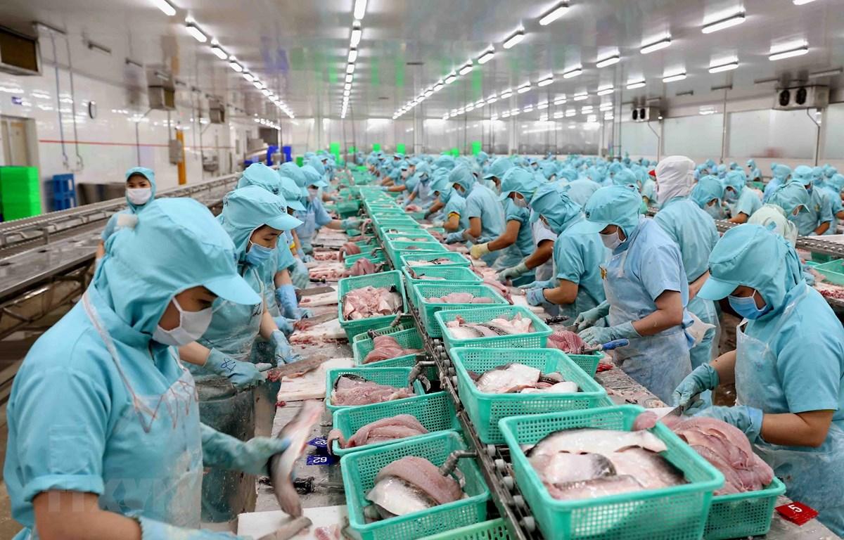 Cá tra vẫn loay hoay tìm thị phần tại thị trường nội địa
