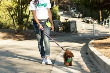 SoftBank từ bỏ startup dắt chó đi dạo