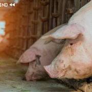Năm chìm nổi của nông sản, hàng hóa Việt