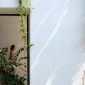 <p> Cây được trồng theo chiều dọc trong các khối trống ngẫu nhiên của bức tường phía tây, trên sân thượng, phía trước và phía sau nhà.</p>