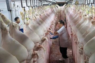 Cảnh báo doanh nghiệp tham gia, tiếp tay cho buôn lậu thịt lợn qua biên giới
