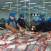 Doanh số xuất khẩu tháng 11 Vĩnh Hoàn đạt 33 triệu USD, giảm 15% cùng kỳ