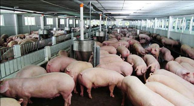Thịt lợn hạ giá rồi, quyết định giảm 1.000 đồng/kg - Ảnh 1.