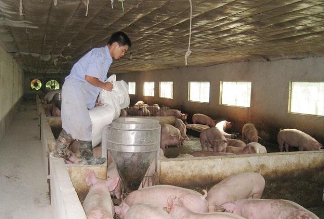 Sẽ nhập 100.000 tấn thịt lợn: Giải pháp tình thế cho dịp Tết