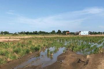 Vùng ven TP HCM: Bùng phát rao bán phân lô đất ruộng