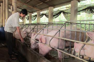 'Giá thịt lợn cứ cao quá, người tiêu dùng quay lưng không ăn nữa'
