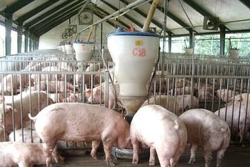Thịt lợn Mỹ, Pháp nhập về Việt Nam giá 26.000 đồng/kg