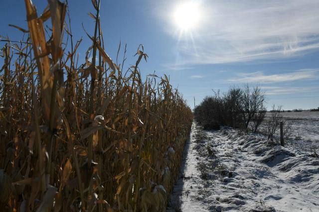 Vụ mùa của nông dân Mỹ không đủ tệ để nhận được các khoản bảo hiểm nhưng cũng không đủ tốt để bù lại chi phí. Ảnh: Reuters.