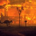 <p> Một con kangaroo chạy khỏi đám cháy ở hồ Conjola, Australia vào ngày 31/12. Các đám cháy tại Australia bắt đầu từ tháng 9 và kéo dài đến nay. Tình trạng này vẫn chưa thể kiểm soát hoàn toàn khi nhiệt độ tại Australia đã phá các kỷ lục và dự báo còn tiếp tục tăng. Các đám cháy hiện đã thiêu rụi hơn 56.000 km vuông đất, khiến hàng nghìn người phải sơ tán và ảnh hưởng xấu đến môi trường. Ảnh: <em>New York Times.</em></p>