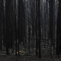 <p> Khu rừng chạy dọc đường Bendalong, bang New South Wales, bị thiêu rụi và chỉ còn là một màu đen chết chóc vào ngày 5/1. Đầu tuần này, Australia bắt đầu đón những trận mưa lớn, giúp thu hẹp tình trạng cháy rừng. Tuy nhiên, chính phủ vẫn cảnh báo khả năng cháy rừng trở lại trong những ngày tiếp theo. Ảnh: <em>Reuters</em>.</p>