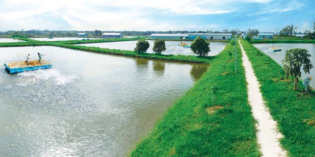 Hùng Vương đặt mục tiêu doanh thu 12.500 tỷ đồng năm 2020