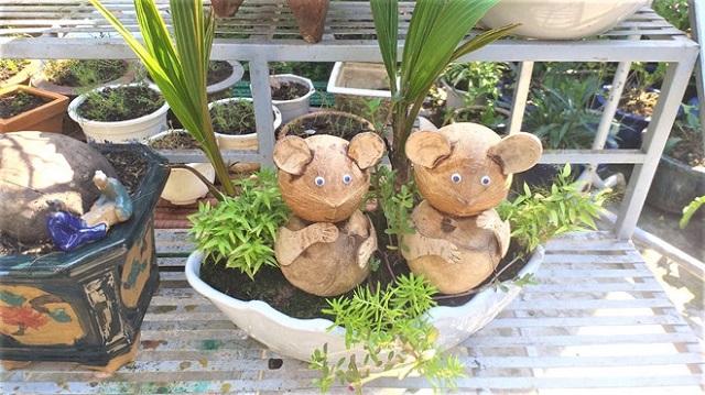 bonsai-dua-3-v-3475-1578668221.jpg