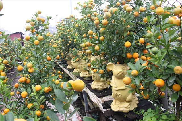 chuot-bonsai-v2-2350-1578668221.jpg