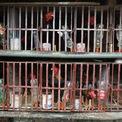 <p> Gà Hồ - giống gà đặc sản của vùng Kinh Bắc (tên gọi xưa của vùng Bắc Ninh, Bắc Giang) từng được dùng làm lễ vật tiến vua, hiện chỉ còn được nuôi ở làng Lạc Thổ, thị trấn Hồ (huyện Thuận Thành).</p>