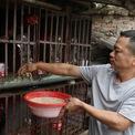 <p> Trại gà Hồ của gia đình anh Dương Hữu Dũng (42 tuổi) ở ngõ Chêu, làng Lạc Thổ có truyền thống lâu đời, với khoảng 100 con gà được chăm sóc theo cách thức cầu kỳ hơn gà thông thường. Thức ăn là gạo xay vỡ với rau hoặc cá được nấu chín để tránh dịch bệnh.</p>