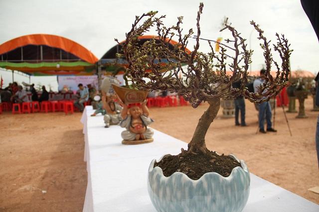 mai-bonsai-8v79-1446-1579081241.jpg
