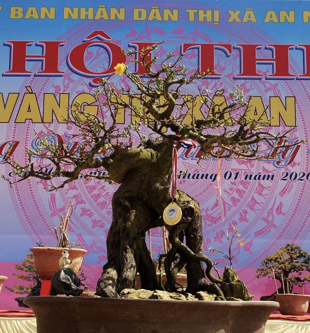 mai-huy-chuong-vang-2-v44-7953-157908124