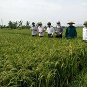 Thanh Hóa được chuyển đổi mục đích sử dụng gần 96 ha đất