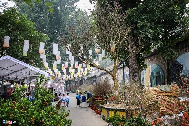 Cây mai trăm tuổi giá đắt ngang căn chung cư cao cấp ở Hà Nội
