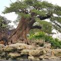 <p> A. Tèo còn có cây me cổ thụ trăm năm với giá rao bán 900 triệu đồng.</p>