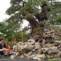 <p> Để mang những cây to lên TP HCM, nhà vườn A. Tèo đã phải thuê xe cẩu, đi làm nhiều chuyến. Chủ vườn cho biết cả vườn có 200 cây và đều là cổ thụ, giá bán vài trăm triệu đồng mỗi cây.</p>