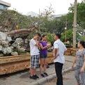 <p> Cũng trong khu vườn A. Tèo giới thiệu tại hội chợ, cây mai vàng bonsai khác nhận được sự quan tâm của nhiều người tham quan, tìm hiểu, mua sắm. Nhiều người cũng dừng lại chụp hình, tạo dáng dưới gốc cây.</p>