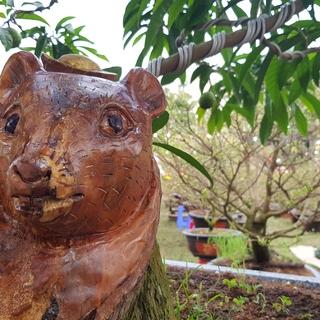 Cây khế 'mặt chuột' được rao bán giá 500 triệu đồng