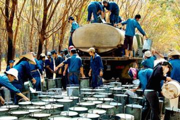 Phước Hòa có quý lỗ đầu tiên 135 tỷ đồng do chưa được ghi nhận tiền đền bù đất