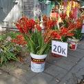 <p> Sáng 30 Tết, nhiều hàng hoa tại TP HCM trưng biển giảm giá hoa. Trong đó, hoa lay ơn (hoa dơn) được bán với giá 20.000 đồng/10 bông, chỉ bằng 20% thị trường. Chủ cửa hàng cho biết đây là hoa Đà Lạt, khách mua có thể chọn lựa và loại bỏ những bông không ưng ý. Theo quan sát của phóng viên, những bông hoa lay ơn này đã nở rộ.</p>