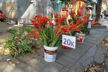 TP HCM: Xả hàng hoa sáng 30 Tết, chục bông lay ơn chỉ 20.000 đồng