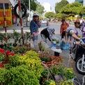 <p> Nhiều loại hoa khác nhau được bán giá 40.000 - 50.000 đồng/giỏ, thu hút đông người mua. Nhiều khách còn mặc cả thấp hơn nữa nhưng chủ vườn không chịu bán, vì đã giảm 10.000 - 20.000 đồng/giỏ so với hôm qua.</p>