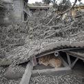 """<p class=""""Normal""""> Một con chó hoang nấp dưới mái nhà sập do sức nặng từ bụi tro của núi lửa Taal ở Laurel, tỉnh Batangas, Philippines. Ảnh: <em>Getty Images.</em></p>"""