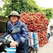 Trái cây Việt tiếp tục thâm nhập nhiều thị trường khó tính