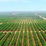 Gánh nặng lãi vay và chi phí chuyển đổi vườn cây lớn, HAG lỗ hơn 1.600 tỷ năm 2019