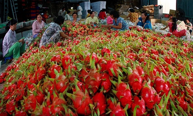 Xuất khẩu nông sản sang Trung Quốc gặp khó trước tâm dịch corona