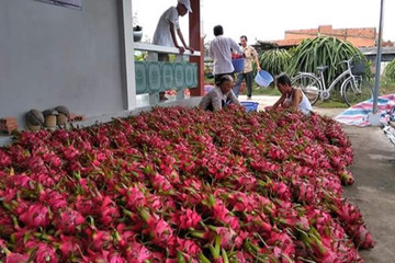 Đề nghị 'giải cứu' nông sản bị 'vạ lây' từ dịch cúm corona