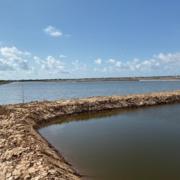 Sao Ta lãi 2019 tăng 28%, xuất khẩu tôm không bị ảnh hưởng bởi dịch corona
