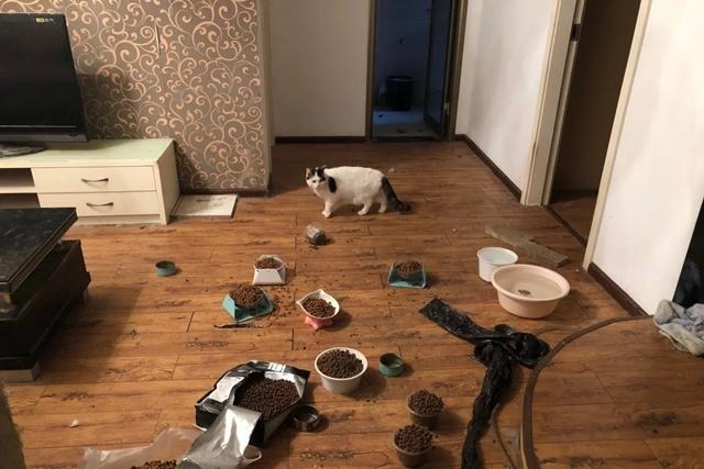 Tình nguyện viên để lại thức ăn và nước đủ cho cả tháng cho một vật nuôi ở Vũ Hán. Ảnh: