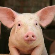 Năm 2020, nguồn cung thịt lợn dự kiến đạt trên 4 triệu tấn