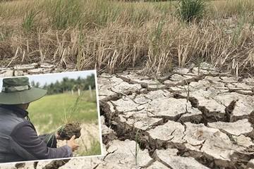 Hạn mặn bủa vây đồng bằng sông Cửu Long