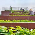<p> Mái nhà được thiết kế theo dạng bậc thang, từng khu vực lại trồng một loại rau riêng.</p>