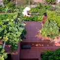 <p> Khu vườn trên sân thượng giúp cách nhiệt cho ngôi nhà hiệu quả hơn nhiều so với mái tôn điển hình, đem lại sự dịu mát. Ngoài khu vực trồng rau, mái nhà còn có những không gian trống để vui chơi, thư thái.</p>