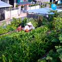 <p> Khung cảnh bình yên ở vườn rau vào mỗi buổi chiều. Nhìn thoáng qua, không ai có thể nghĩ rằng đây lại là một vườn rau được trồng trên mái nhà, xanh tốt bất ngờ.</p>